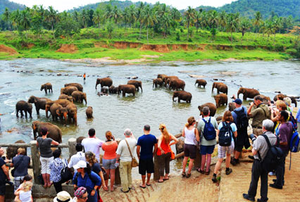 Pinnawela Elephant Orphanage