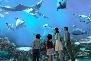 sentosa island sea aquarium
