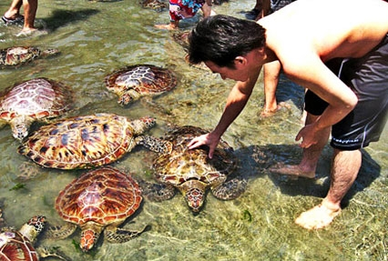 turtle island near bali