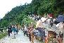Pilgrims Moving towards Kedarnath Temple
