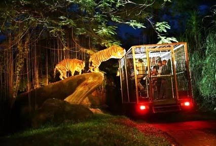 night at the zoo singapore