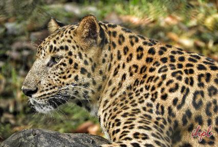 Similipal National Park