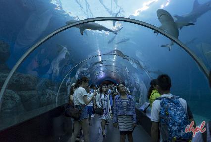 singapore underwater aquarium