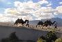 White Sand Dunes Nubra Valley