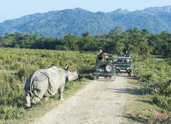 Wildlife Safari in Kaziranga National Park