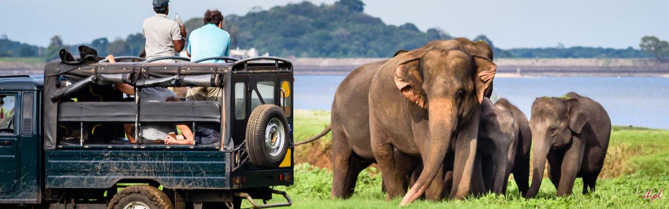 Pinnawala Elephant Orphanage in Sri Lanka