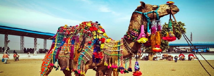Pushkar Fair in pushkar