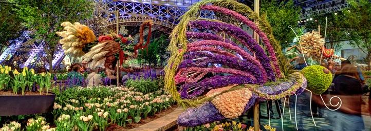 The Delhi Flower Show festival in delhi
