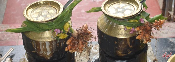 pongal festival in andhra pradesh, india