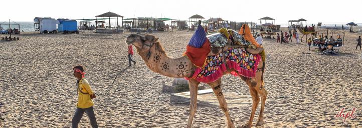 Beach Festival in gujarat