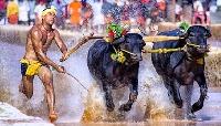Kambala festivals in Karnataka