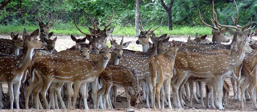 Deer Park, Karimnagar in Telangana