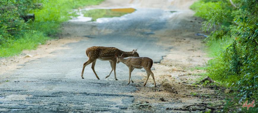 Tirunelveli bird sanctuary