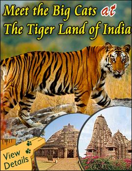 Madhya Pradesh Packages