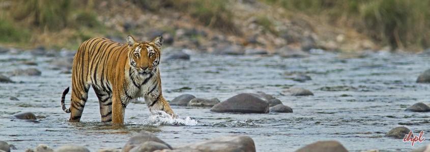 corbett national park in India