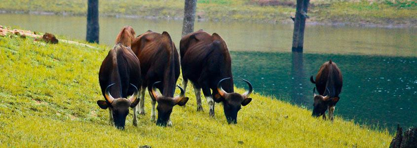 short trip to dajipur wildlife sanctuary