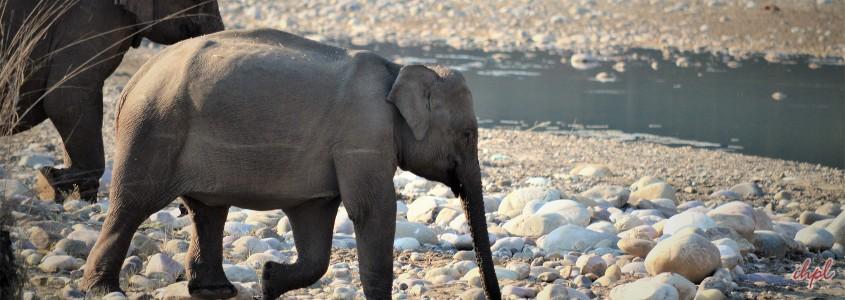 short trip to rajaji national park