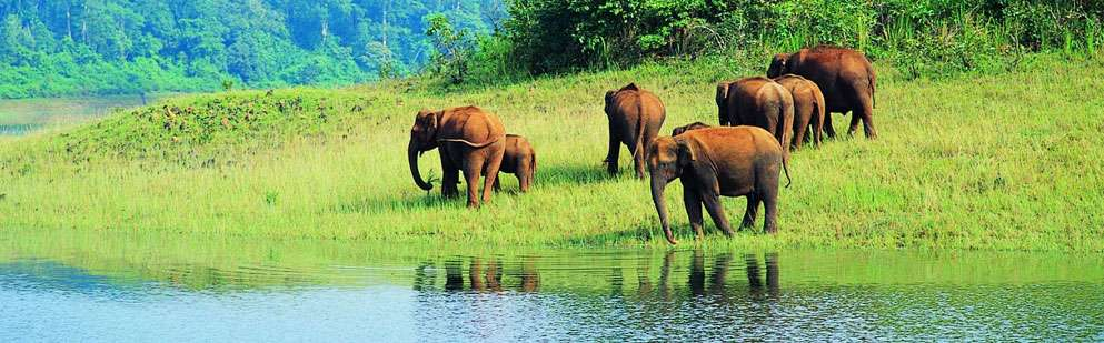 essay on wildlife in india India is a mega-diversity country bestowed with indo-himalaya ecozone region, which alone has 60-70% of the world's biodiversity to its credit.