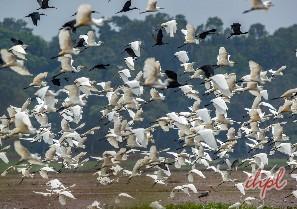 Butterfly at Kumarakom