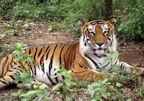 need for wildlife conservation in india
