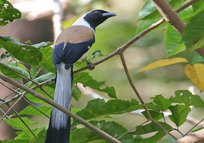 Salim Ali Bird Sanctuary In North Goa