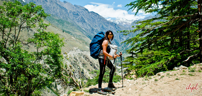 himalayan black bear  in nanda devi national park