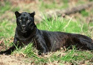 animal nature preserve